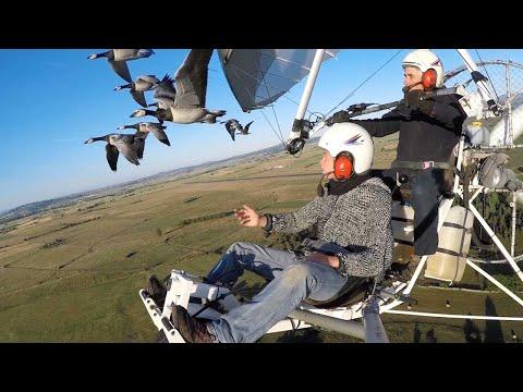 Volar con los pájaros